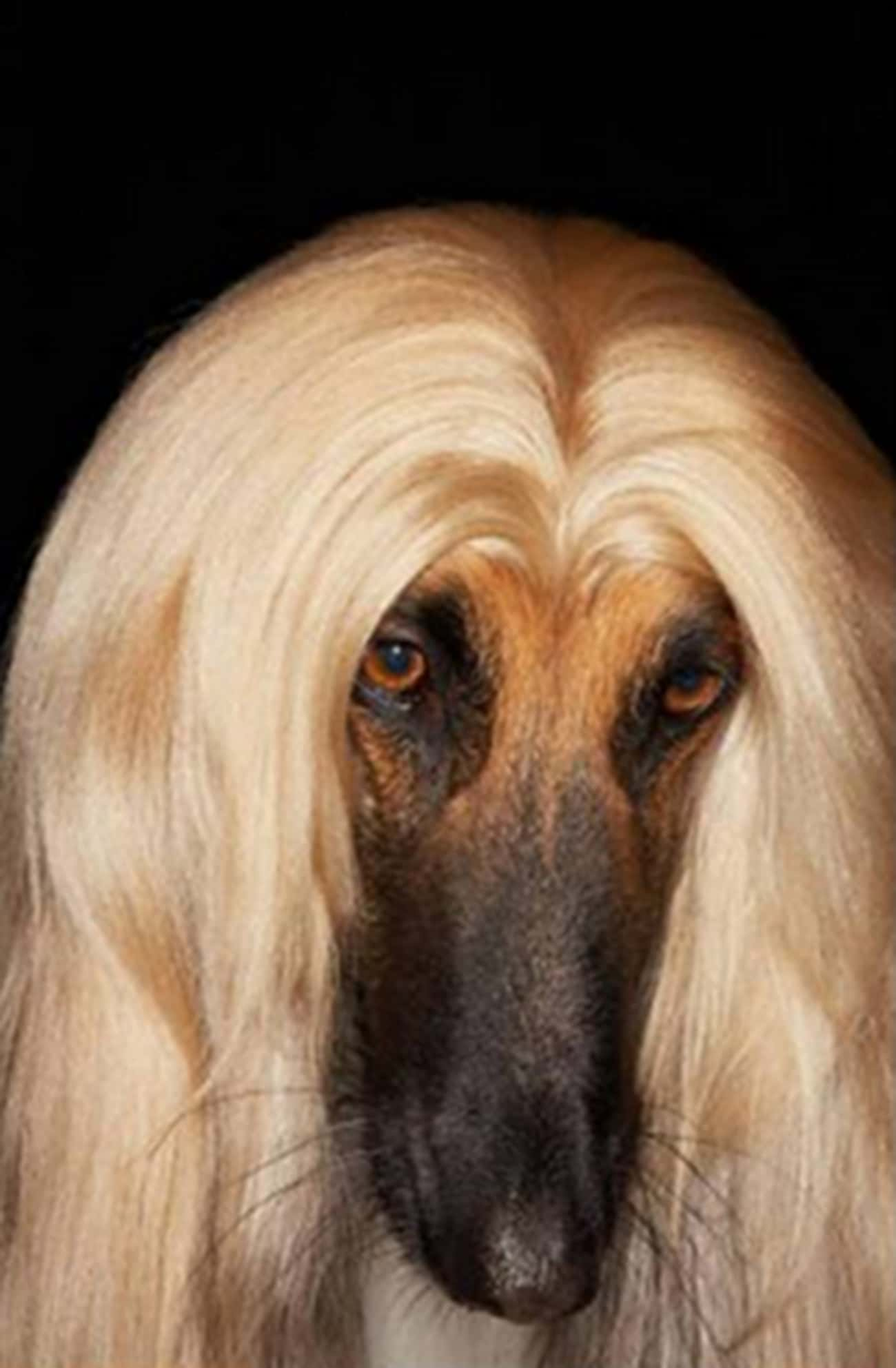 A Blonde Middle-Part That Woul is listed (or ranked) 1 on the list 34 Animals Having a Better Hair Day Than You