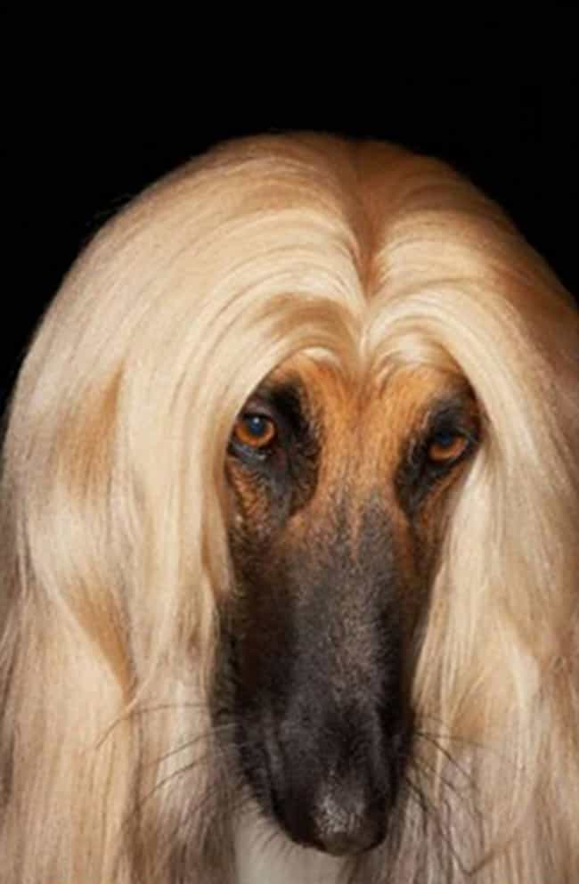 A Blonde Middle-Part That Woul... is listed (or ranked) 1 on the list 34 Animals Having a Better Hair Day Than You