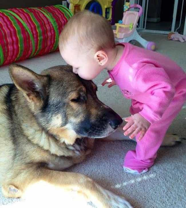 This Pup Getting a Kiss is listed (or ranked) 3 on the list 47 Dogs and Babies Who Are Adorable Best Friends