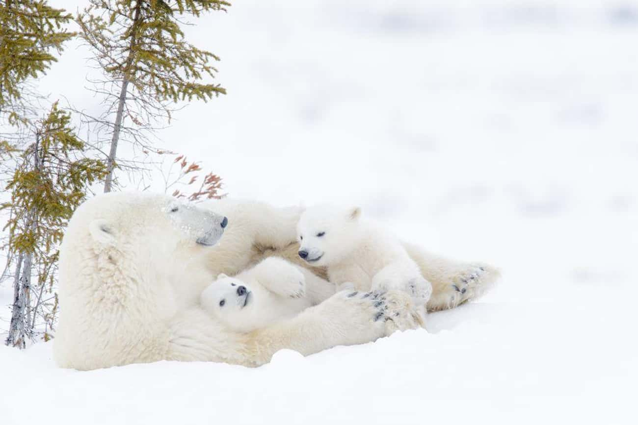This Snuggling-In-The-Snow Tri is listed (or ranked) 3 on the list 20 Animal Family Photos That Are Way Cuter Than Yours