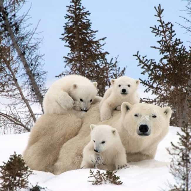 This Adorable Family That Is V... is listed (or ranked) 3 on the list 41 Animal Family Photos That Are Way Cuter Than Yours