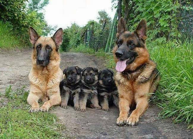 These Precious Pups is listed (or ranked) 7 on the list 41 Animal Family Photos That Are Way Cuter Than Yours