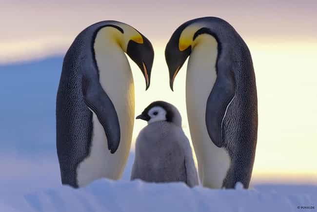 This Well Timed Shot of ... is listed (or ranked) 2 on the list 41 Animal Family Photos That Are Way Cuter Than Yours