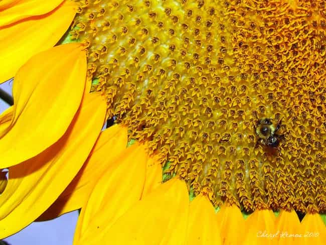 The 50 Worst Images For Trypophobics Fear Of Holes Viraluck