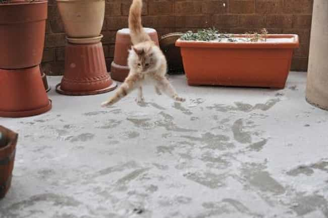 Snow Cats CAN Jump! is listed (or ranked) 1 on the list 31 Cats Learning to Love the Snow
