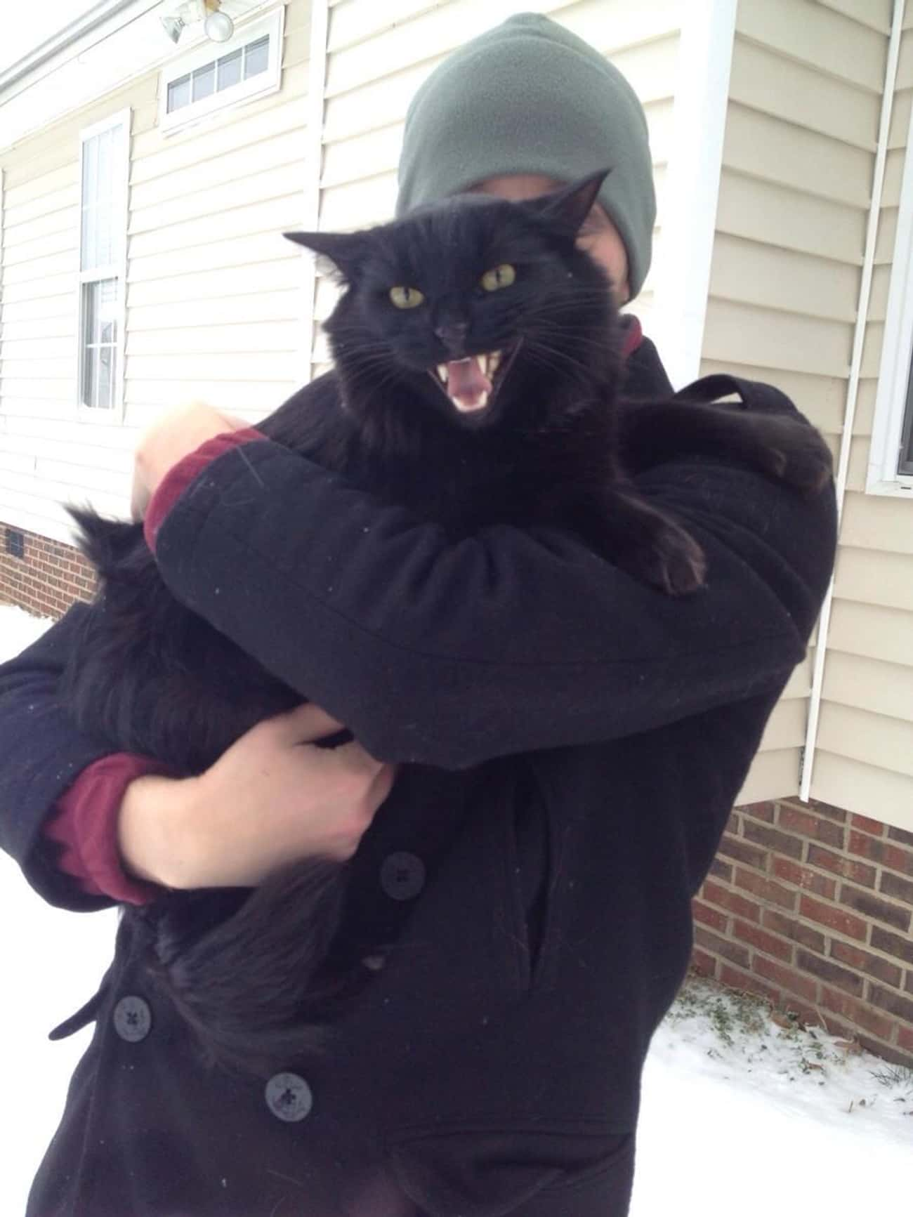 Hahahaha I Made The Whole Worl is listed (or ranked) 1 on the list 20 Cats Learning to Love the Snow
