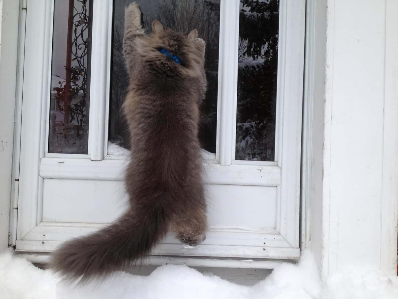 JK, I Hate This, Please Let Me is listed (or ranked) 3 on the list 20 Cats Learning to Love the Snow