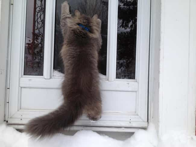 JK, I Hate This, Please ... is listed (or ranked) 3 on the list 31 Cats Learning to Love the Snow