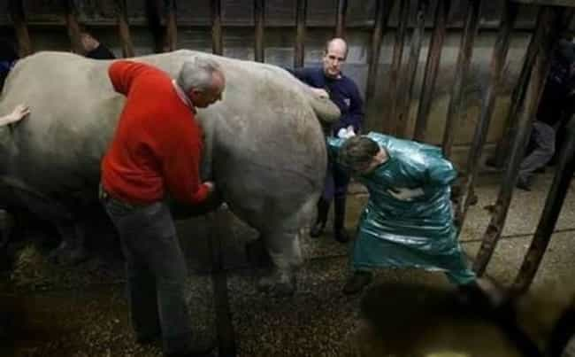 There Are Reasons Why Rhinos A... is listed (or ranked) 4 on the list Let's Take a Moment and Vote on the Worst Jobs EVER