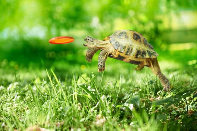Turtle games. is listed (or ranked) 1 on the list The Craziest Stock Photos on the Internet