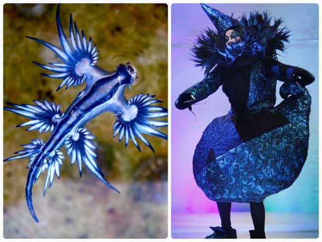 Blue Dragon is listed (or ranked) 3 on the list The Most Beautiful High Fashion Nudibranchs