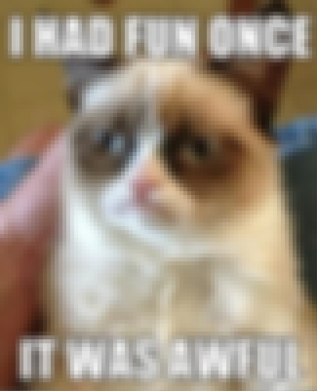 Grumpy Cat is listed (or ranked) 1 on the list The Best Animal Memes