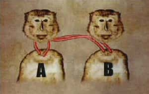 Monkey Head Transplant is listed (or ranked) 4 on the list Craziest Cases of Animal Experimentation Throughout History