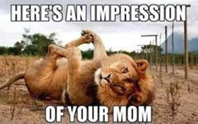 This Implication That Even The Animal Kingdom Knows Of Your Moms Infamy