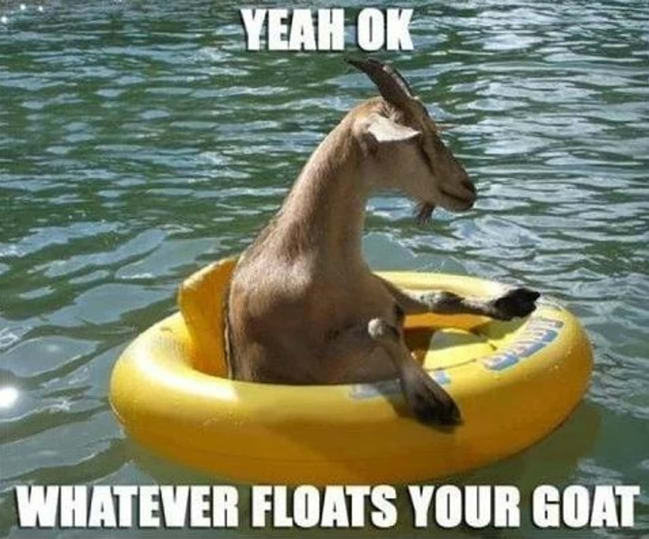 Goats are amphibious now! is listed (or ranked) 3 on the list The Best Goat Memes, Jokes, and Puns