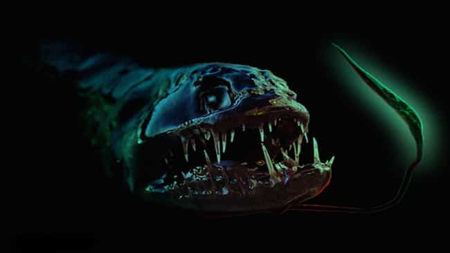 The Deadly Looking Dragonfish is listed (or ranked) 2 on the list 45 Deep Sea Creatures That'll Scare You Away from the Ocean