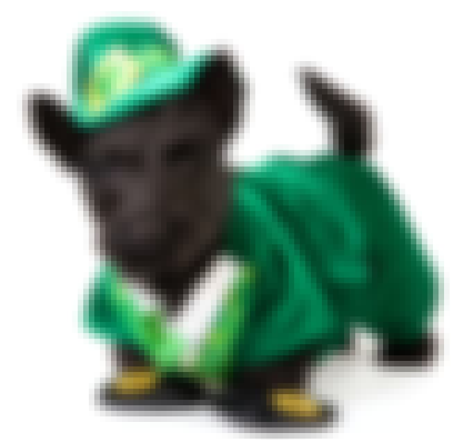 This Dapper Scottish Terrier W... is listed (or ranked) 3 on the list 36 Pets Who Are Absolutely Nailing St Patricks Day