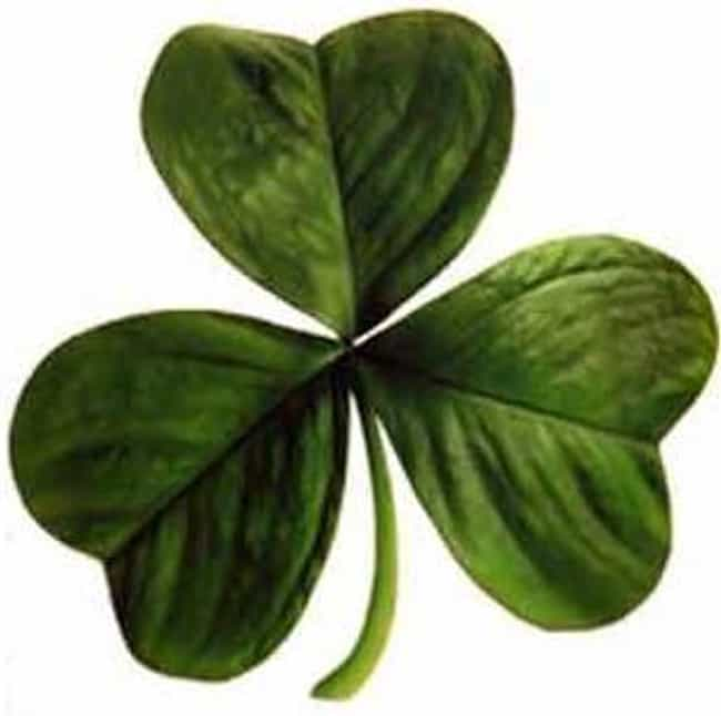 The Shamrock May or May ... is listed (or ranked) 4 on the list Myths and Legends About St. Patrick's Day