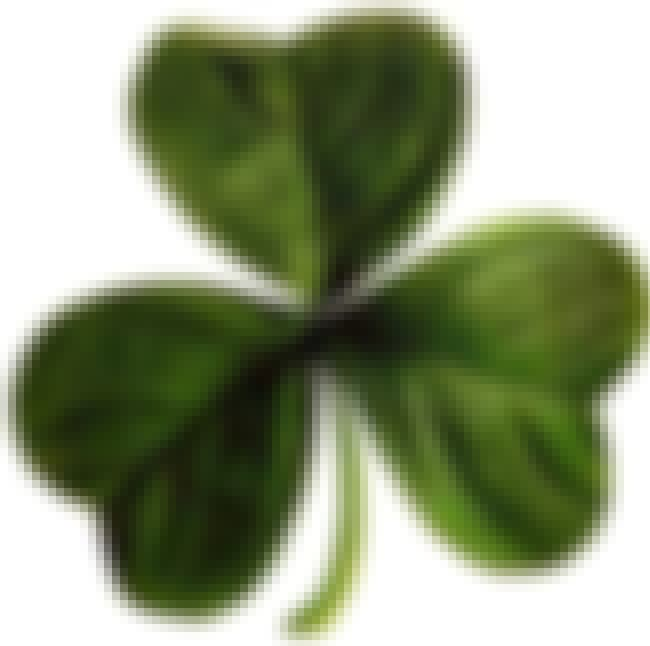 The Shamrock May or May Not Be... is listed (or ranked) 4 on the list Myths and Legends About St. Patrick's Day
