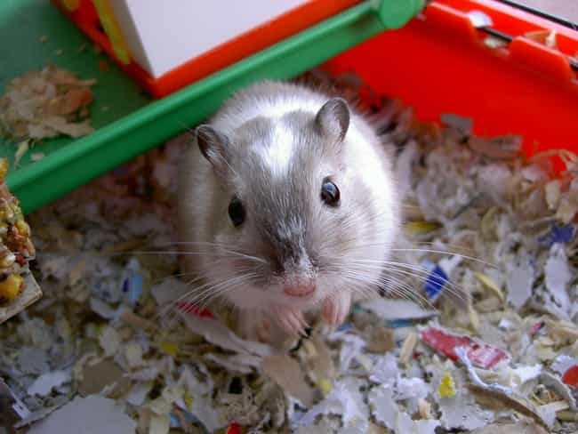 Gerbils is listed (or ranked) 1 on the list The Top 29 Most Deadly Animals
