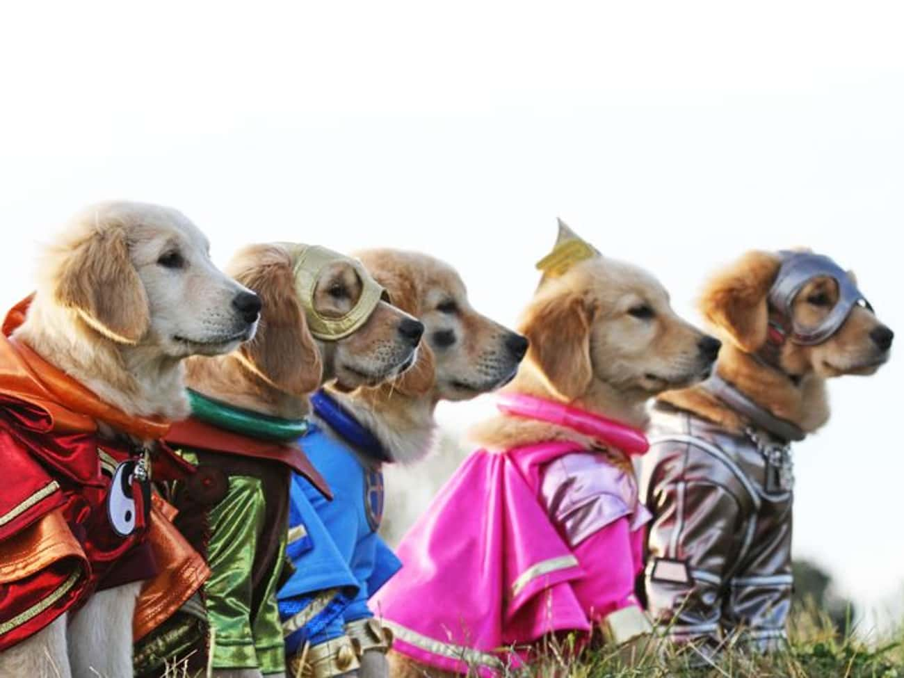 The League of Extraordinary Pu is listed (or ranked) 3 on the list The Cutest Dogs Dressed as Superheroes