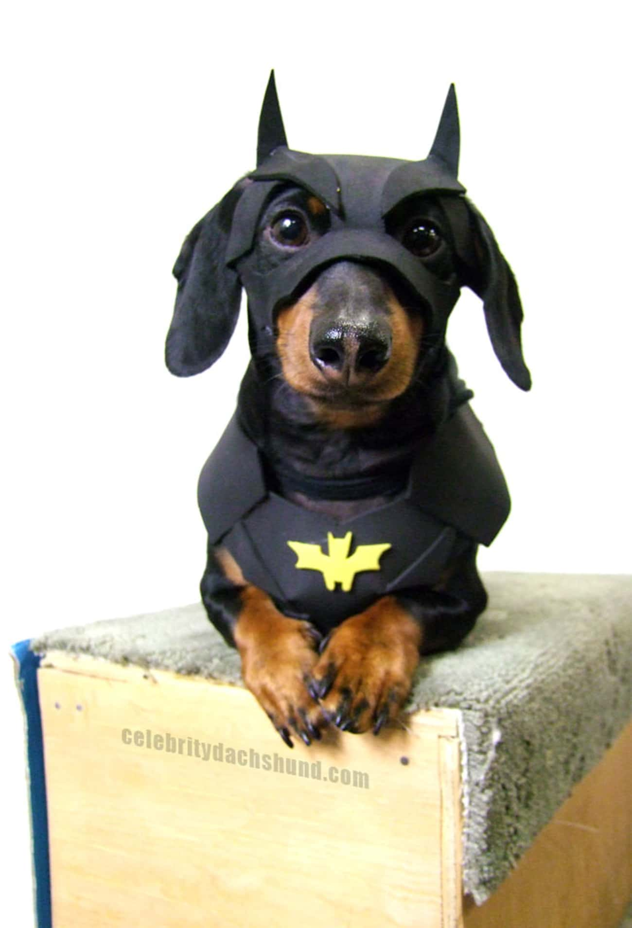 The Bark Knight is listed (or ranked) 4 on the list The Cutest Dogs Dressed as Superheroes
