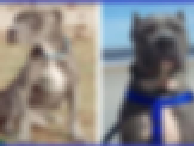 Rilind... Reborn! is listed (or ranked) 4 on the list The Cutest Before and After Pictures of Adopted Dogs