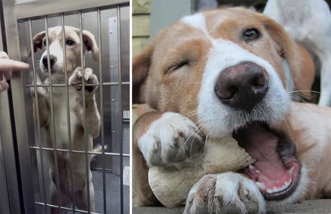 Ahhh... This Is the Life! is listed (or ranked) 3 on the list The Cutest Before and After Pictures of Adopted Dogs