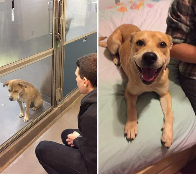 Spokey Gets a Second Chance is listed (or ranked) 1 on the list The Cutest Before and After Pictures of Adopted Dogs