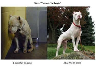 Nico Was Rescued By A Lot Of D is listed (or ranked) 2 on the list The Cutest Before and After Pictures of Adopted Dogs
