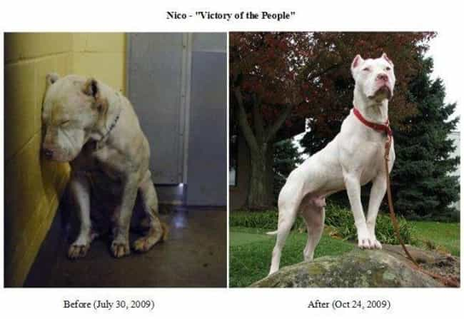 Nico Swanngarris: Celebr... is listed (or ranked) 2 on the list The Cutest Before and After Pictures of Adopted Dogs