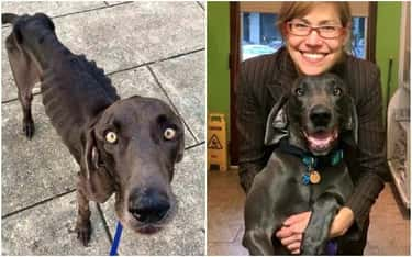 Alex Was Hungry For Affection is listed (or ranked) 1 on the list The Cutest Before and After Pictures of Adopted Dogs