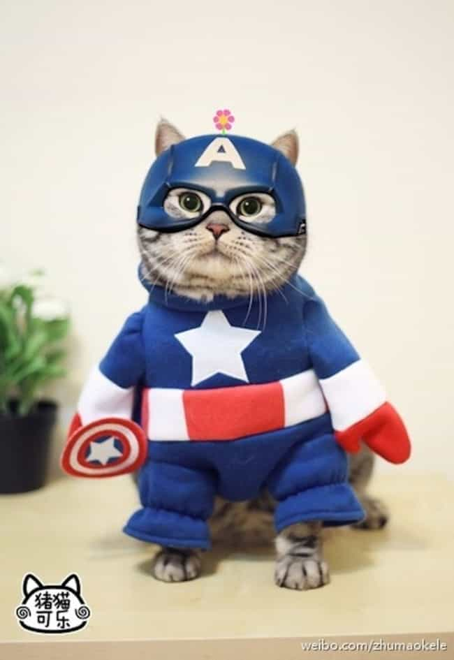 Cat-tain America is listed (or ranked) 3 on the list The Cutest Cats Dressed as Superheroes