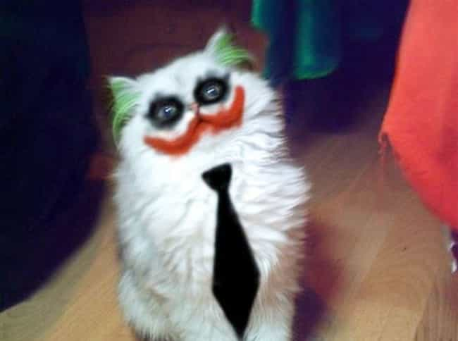 Cute cats dresses as superheroes the clown kitty of crime voltagebd Image collections