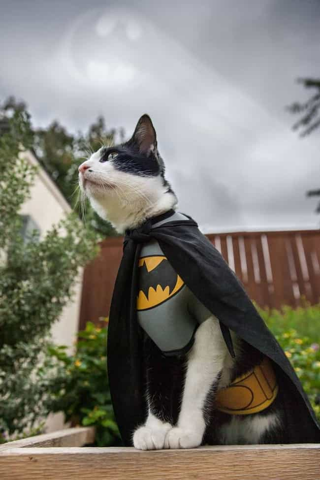 The Unmasked Feline is listed (or ranked) 2 on the list The Cutest Cats Dressed as Superheroes