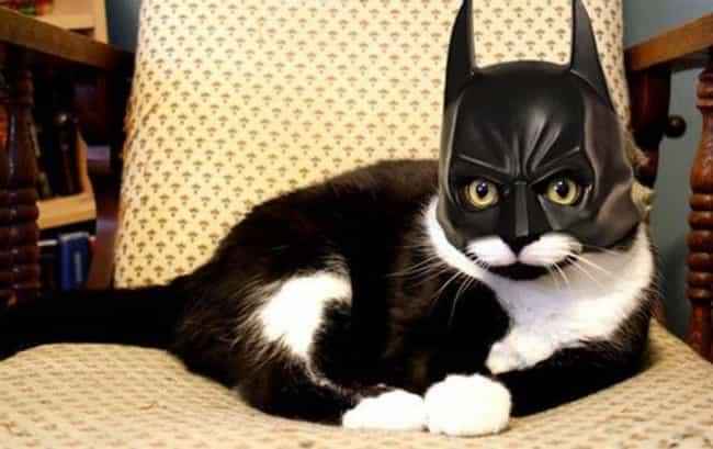 Catman Begins is listed (or ranked) 4 on the list The Cutest Cats Dressed as Superheroes