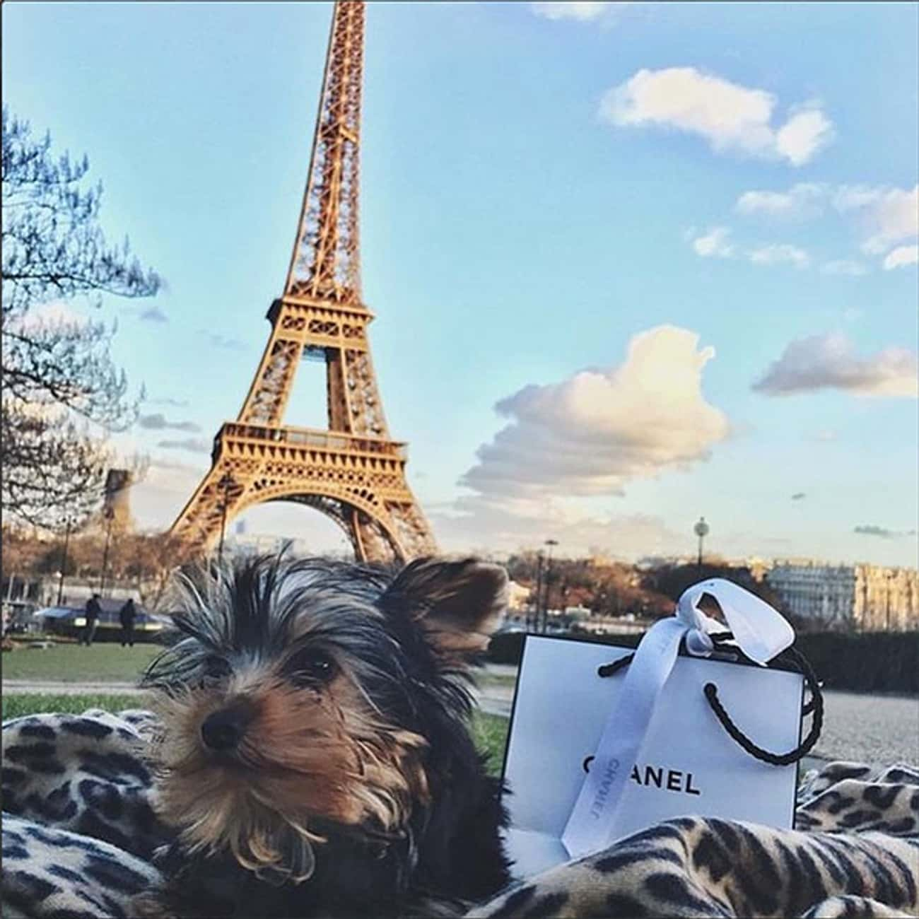 This Dog That Wishes You Had B is listed (or ranked) 2 on the list The Best of the Rich Dogs of Instagram
