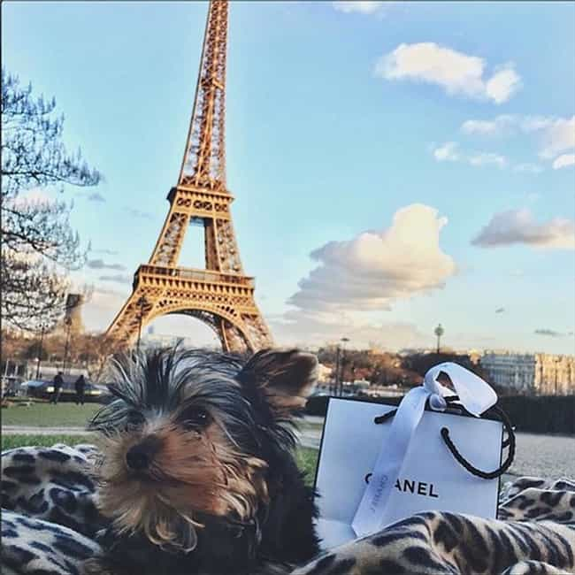 This Dog That Wishes You... is listed (or ranked) 4 on the list The Best of the Rich Dogs of Instagram
