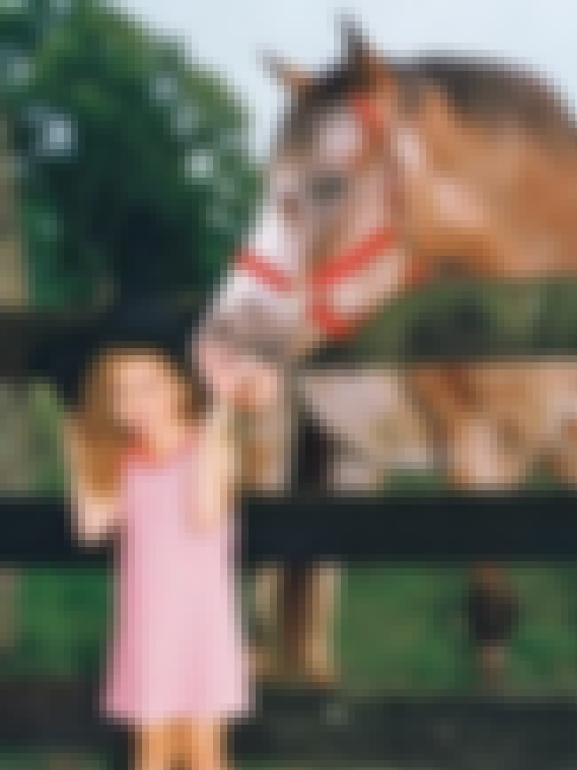 Young Miley Cyrus with a Horse is listed (or ranked) 4 on the list 20 Photos of Young Miley Cyrus
