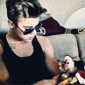 """""""You bought a monkey! I mean,  is listed (or ranked) 21 on the list The Best Jokes from the Justin Bieber Roast"""