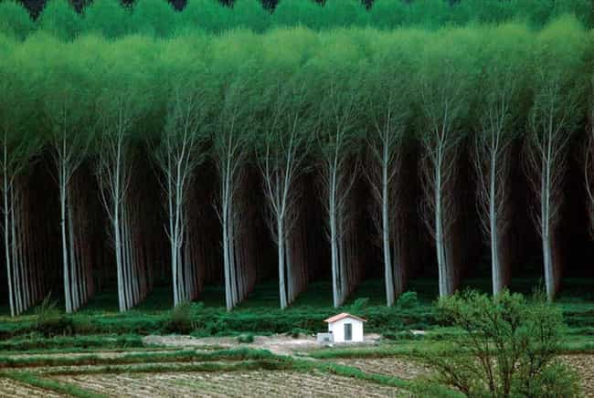 The Rows on This Tree Farm is listed (or ranked) 1 on the list 24 Photos That Are Oddly Satisfying