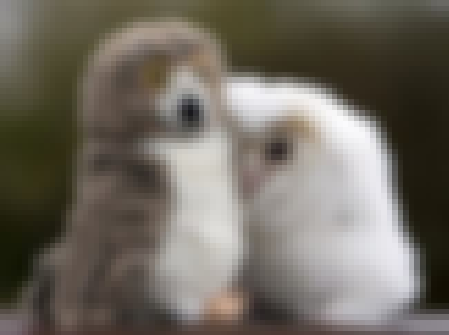 """These """"Awww"""" Inspiring... is listed (or ranked) 1 on the list Real Animals with Stuffed Animals"""