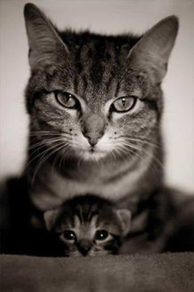 """That, Little One, Is What... is listed (or ranked) 2 on the list Photos of Cats with Their Kittens That'll Make You Say 'Aww'"