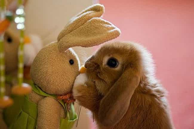 These Bunny Besties is listed (or ranked) 2 on the list Real Animals with Stuffed Animals