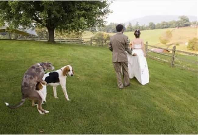 Must Be Something in the... is listed (or ranked) 4 on the list 20 Wedding Photos Gone Wrong