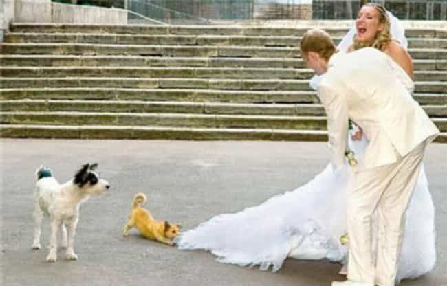 The Risk of Letting Your... is listed (or ranked) 7 on the list 16 Wedding Photos Gone Wrong