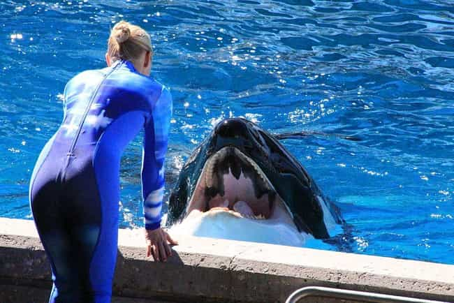 Incidents At Seaworld Parks