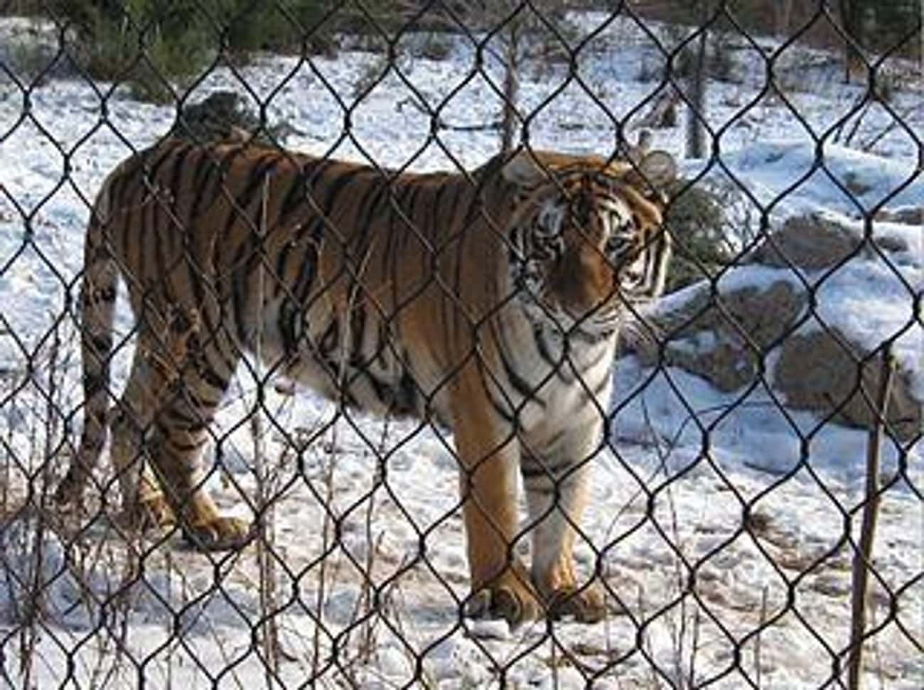 "Captive Animals Suffer From ""Z is listed (or ranked) 4 on the list 19 Secrets Zoos Don't Want You to Know"