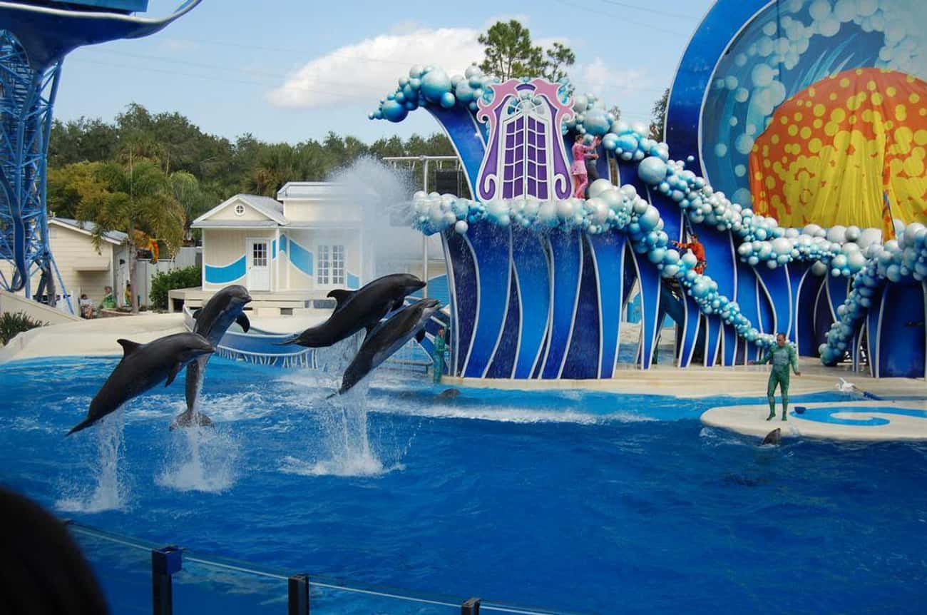 SeaWorld Has Been Fined For Sa is listed (or ranked) 3 on the list 26 Things You Should Know About SeaWorld
