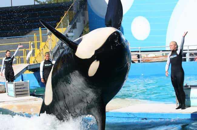 Orcas Can Get Bored is listed (or ranked) 4 on the list 26 Things You Should Know About SeaWorld